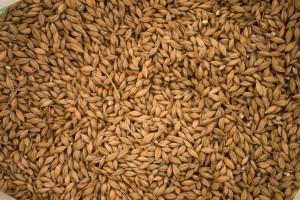 grain (2)