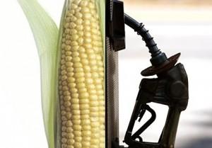 corn-worse-than-oil-california