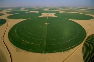 agriculture-saudi-tabuk