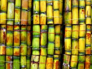 sugar_cane