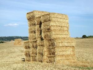 hay-yellow-bale