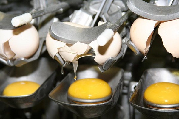 china to adopt national standards for egg products