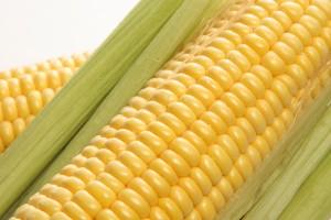 sweet-corn-