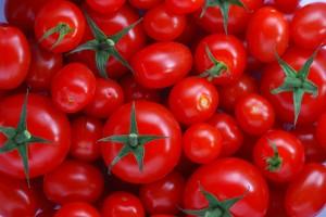 tomatoes1903
