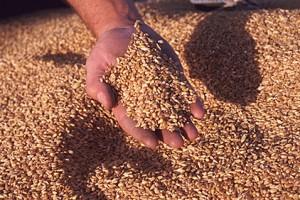 grain2105