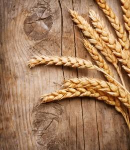 wheat2205