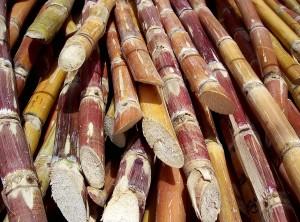 Cut_sugarcane