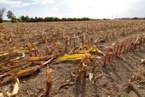california farm drought