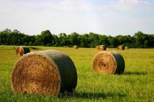 hot_hay