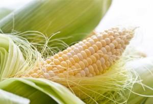 corn2808