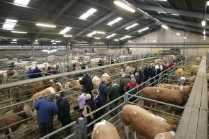 livestock810
