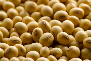 soybean1310