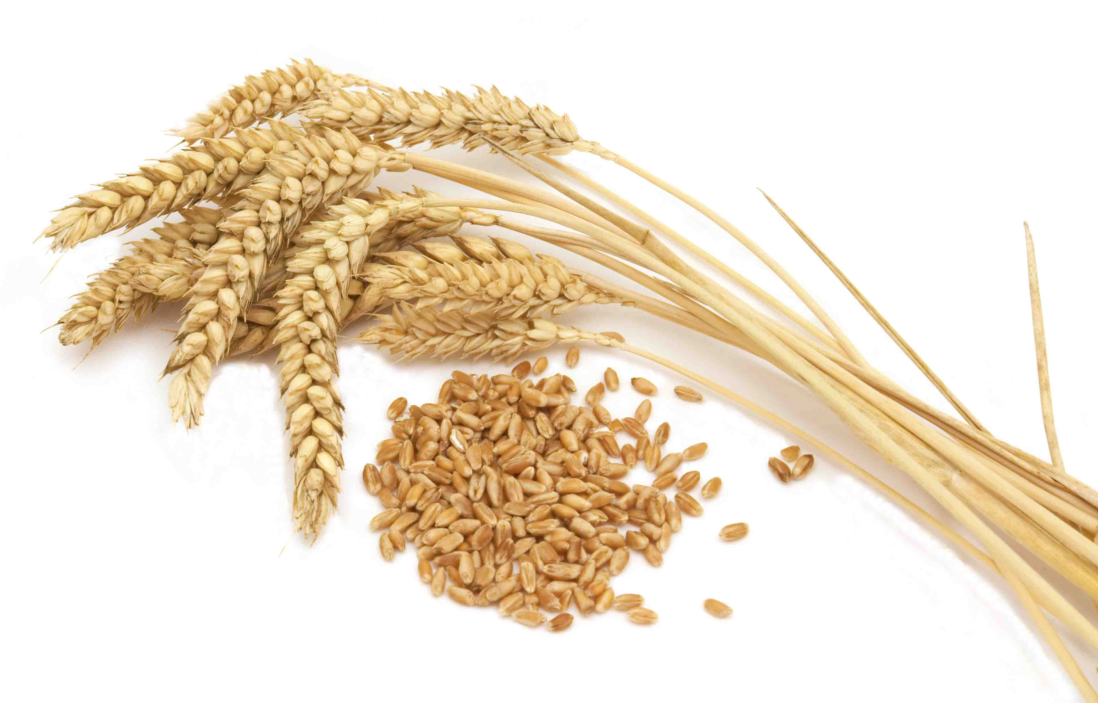 canadian wheat alliance signs with private partners agrodaily