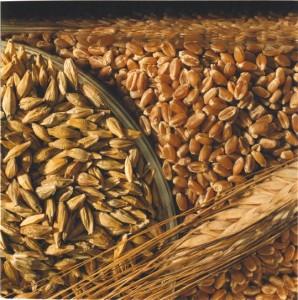 wheat610