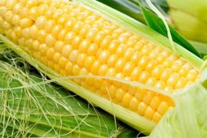 corn2511