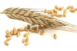 wheat1311