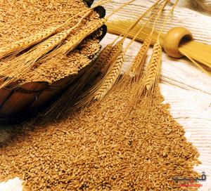 wheat611