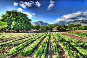 organic_farm2212