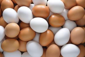 egg2402