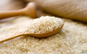 rice503