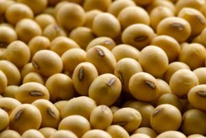 soybean2503