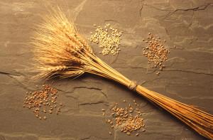 wheat1703