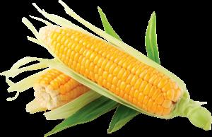 corn0104