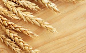 wheat1405
