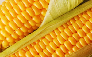 corn3107