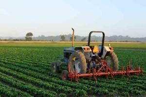 india_agriculture