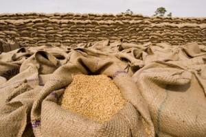 wheat_export