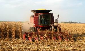 corn_harvest