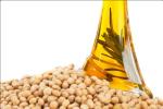 soybean soil