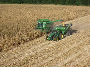 corn_harvesting