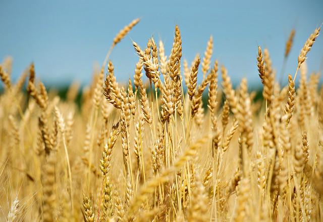 crop pic