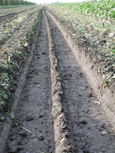 compaction-ruts_575_zoom