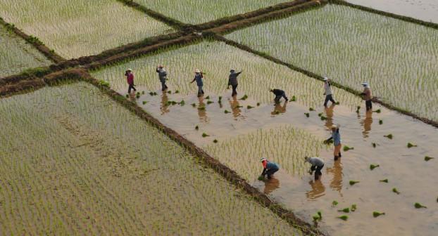 wireless farming