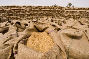 wheat import