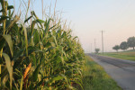 2014-Crop-Tour-Indiana-corn-road