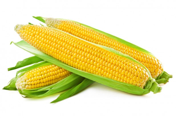 Ag market: corn extends dip, on surprise US crop ...
