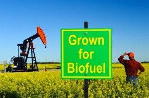 strong-actions-on-biofuel