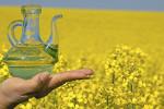 Rape oil, bottle, blossoming rape field