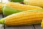 corn1309