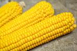 corn809
