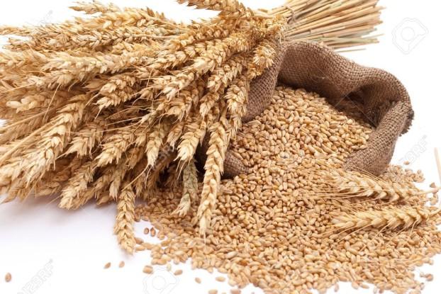 grain1310