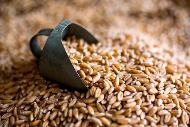 grain3011