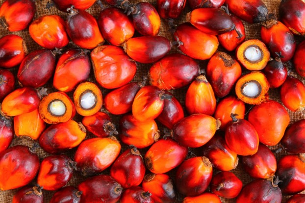 palm oil2111