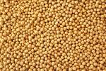 soybean1111