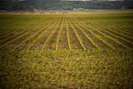 Selling-Iowa-farmland