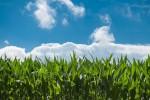 corn-field-4_20150313105449123